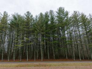 Legislative win give us hope in West Virginia